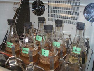 Hydrolyse enzymatique